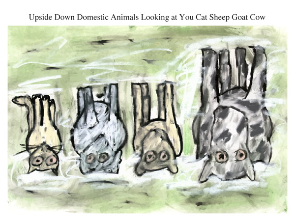 Upside Down Domestic Animals Looking at You Cat Sheep Goat Cow