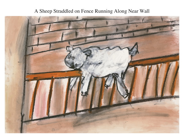 A Sheep Straddled on Fence Running Along Near Wall