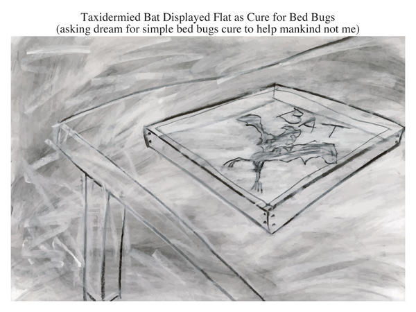 Taxidermied Bat Displayed Flat as Cure for Bed Bugs (asking dream for simple bed bugs cure to help mankind not me)