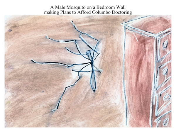 A Male Mosquito on a Bedroom Wall making Plans to Afford Columbo Doctoring