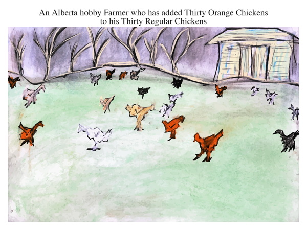 An Alberta hobby Farmer who has added Thirty Orange Chickens to his Thirty Regular Chickens