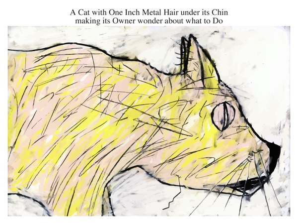 A Cat with One Inch Metal Hair under its Chin making its Owner wonder about what to Do