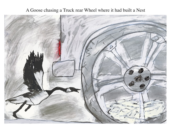 A Goose chasing a Truck rear Wheel where it had built a Nest